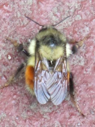 29bee on porch 005
