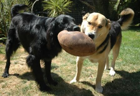 8Football Dogs 111