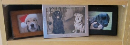 9dog photo shelf 2